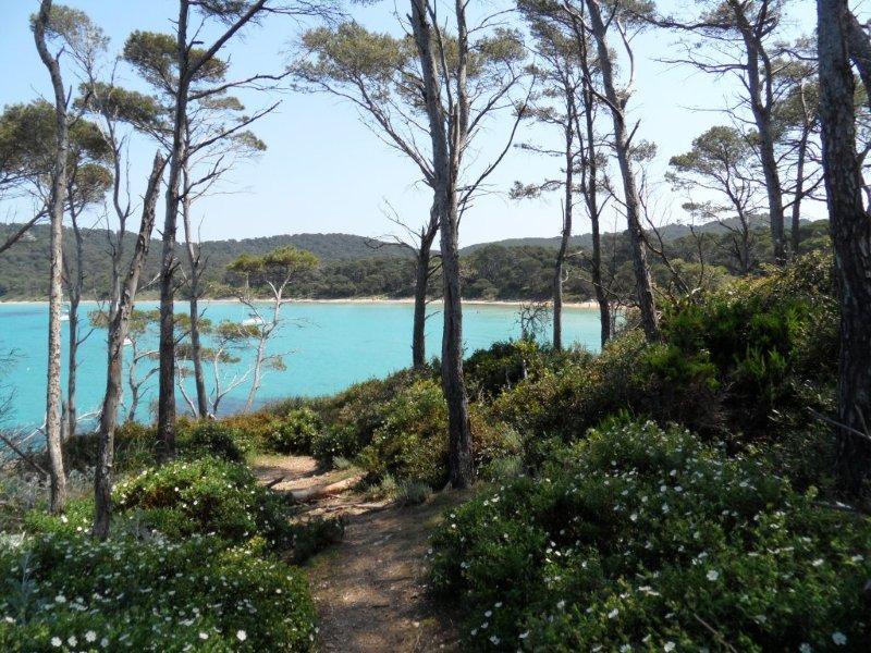 Porquerolles island, near Hyères, Provence