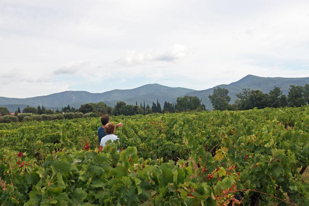 champ de vignes Gonfaron